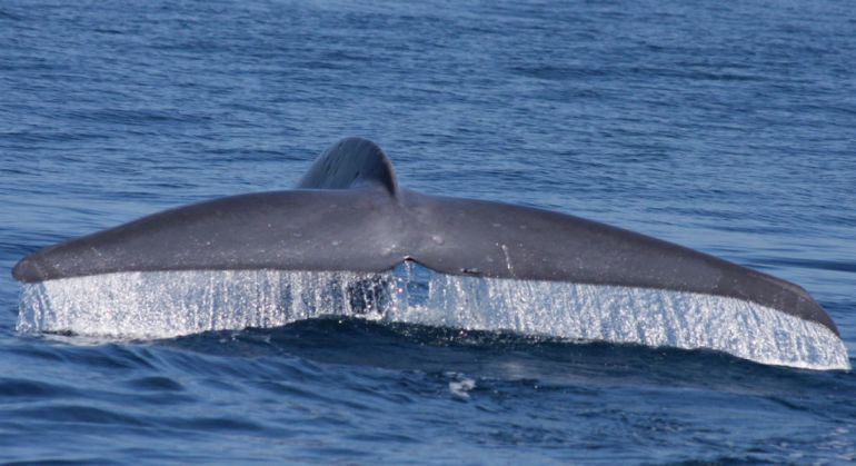 Видео кита член