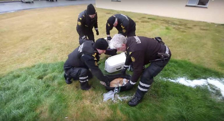 Калейдоскоп, Кот спас исландскую семью от пожара | Кот спас исландскую семью от пожара