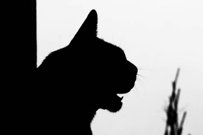 Калейдоскоп, Кого ты больше любишь, бабушку или кошку? | Кого ты больше любишь, бабушку или кошку?