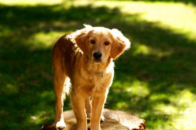Калейдоскоп, Исландка придумала Tinder для собак |