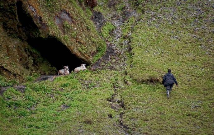 Бизнес, В Исландии алкоголь станет молочным продуктом | В Исландии алкоголь станет молочным продуктом