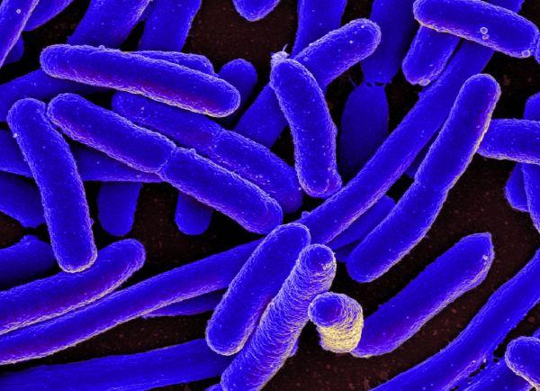 Общество, В Дании нашли ген неуязвимости в бактериях | В Дании нашли ген неуязвимости в бактериях