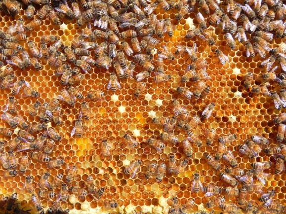 Калейдоскоп, Пчелы, которые живут на крыше | Пчелы, которые живут на крыше