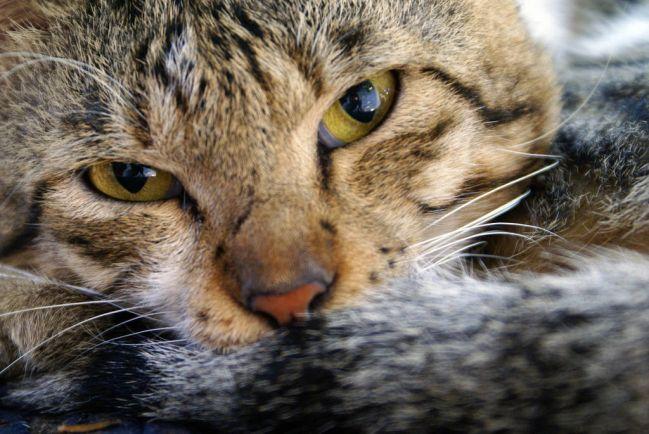 Калейдоскоп, Шведская кошка претендует на звание старейшей на планете | Шведская кошка претендует на звание старейшей на планете