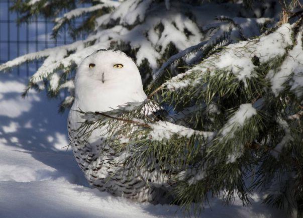Общество, Жители зоопарка и энергетики Хельсинки против парникового эффекта | Жители зоопарка и энергетики Хельсинки против парникового эффекта