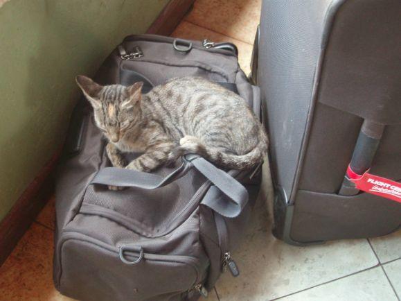 Калейдоскоп, Кошке не удалось улететь из Осло в Лондон | Кошке не удалось улететь из Осло в Лондон