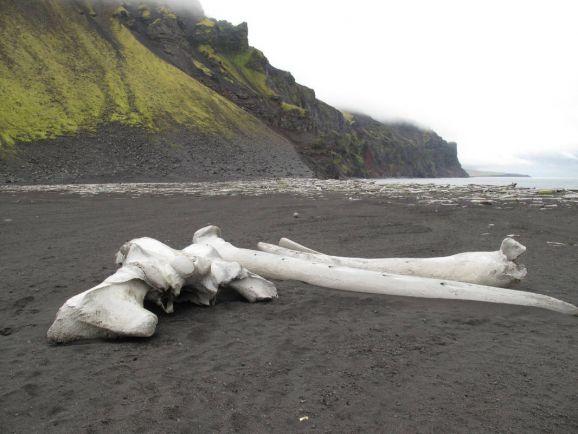 Общество, В Исландии отменили приказ «убивать басков на месте» | В Исландии отменили приказ «убивать басков на месте»