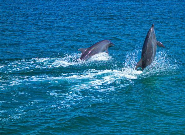 Калейдоскоп, У восточного побережья Швеции появились дельфины | У восточного побережья Швеции появились дельфины