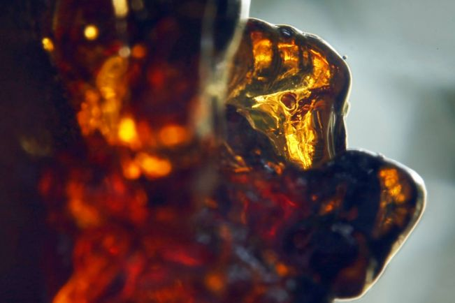 Калейдоскоп, Янтарь из музея Копенгагена попал в Книгу рекордов Гиннеса | Янтарь из музея Копенгагена попал в Книгу рекордов Гиннеса