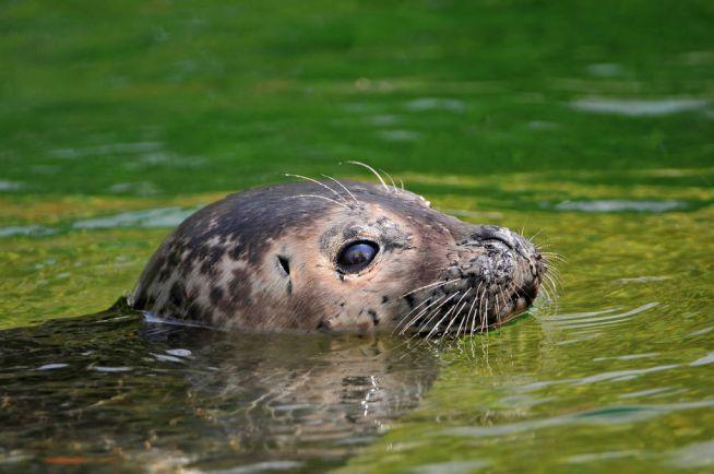 Калейдоскоп, Норвежец поймал тюленя вместо рыбы | Норвежец поймал тюленя вместо рыбы