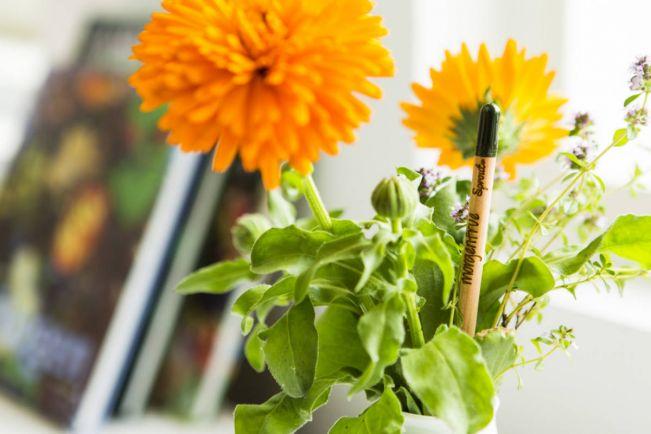 Калейдоскоп, Экологические карандаши из Дании пускают корни по всей планете | Экологические карандаши из Дании пускают корни по всей планете