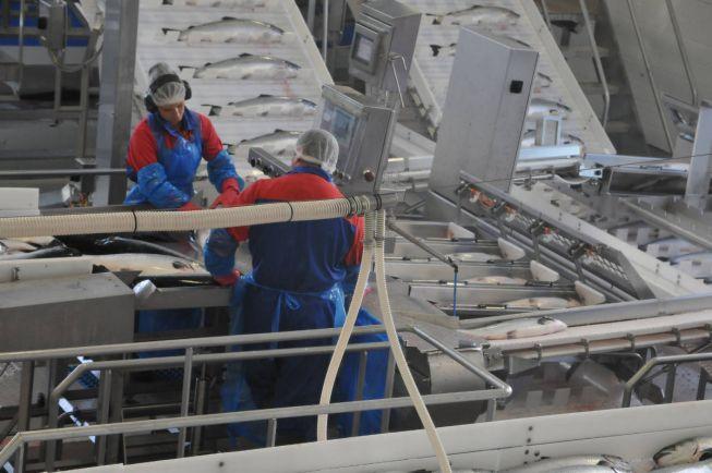 Бизнес, Средний норвежский лосось стоит дороже барреля сырой норвежской нефти | Средний норвежский лосось стоит дороже барреля сырой норвежской нефти