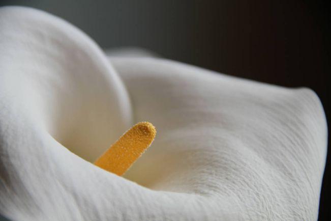 Калейдоскоп, Датчане предлагают заменить «виагру» ударной волной | Датчане предлагают заменить «виагру» ударной волной