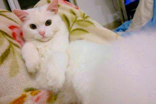 Калейдоскоп, Кот из Ирака нашёл своих хозяев в Норвегии | Кот из Ирака нашёл своих хозяев в Норвегии