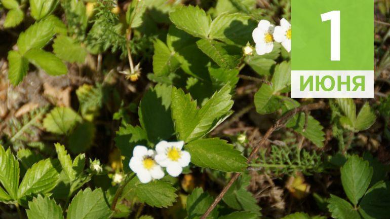 Июнь, 1 | Календарь знаменательных дат Скандинавии