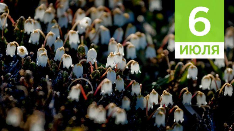 Июль, 6 | Календарь знаменательных дат Скандинавии