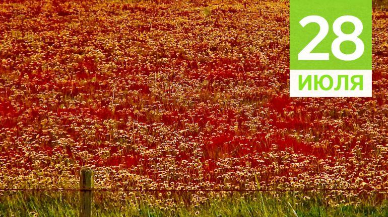 Июль, 28 | Календарь знаменательных дат Скандинавии