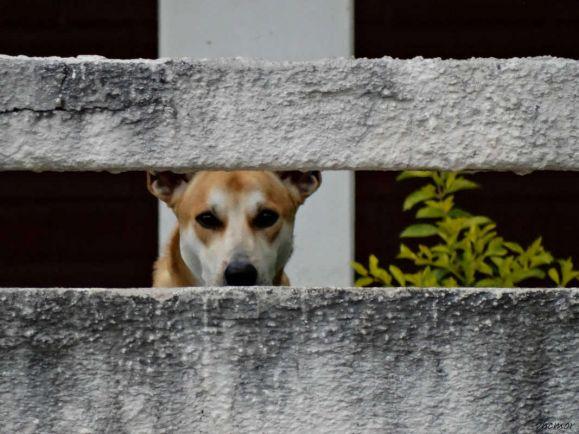 Калейдоскоп, Норвежец отправится в тюрьму за убийство собственной собаки | Норвежец отправится в тюрьму за убийство собственной собаки