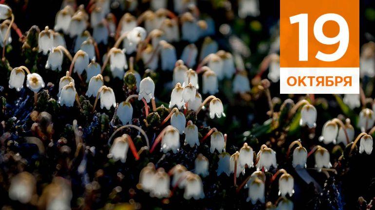 Октябрь, 19 | Календарь знаменательных дат Скандинавии