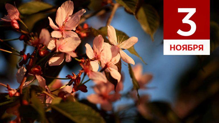 Ноябрь, 3 | Календарь знаменательных дат Скандинавии
