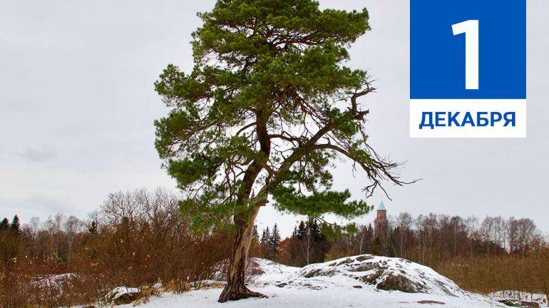Декабрь, 1 | Календарь знаменательных дат Скандинавии