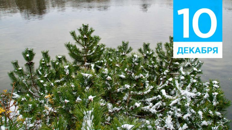 Декабрь, 10 | Календарь знаменательных дат Скандинавии