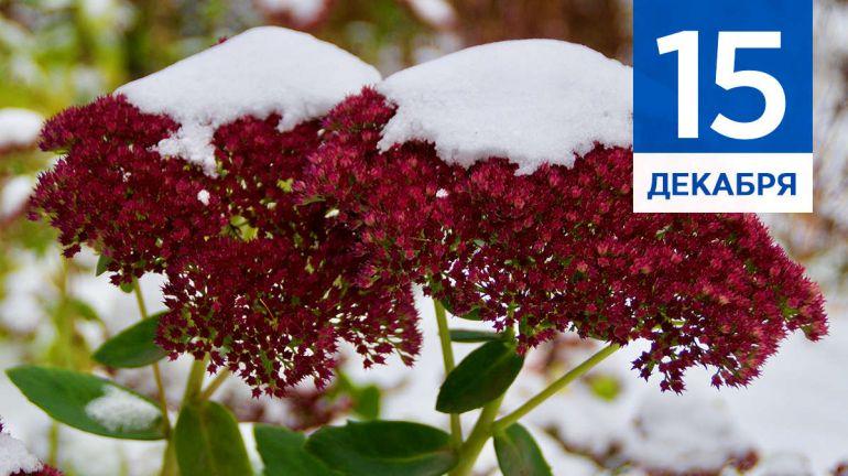 Декабрь, 15 | Календарь знаменательных дат Скандинавии