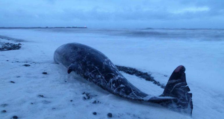 Калейдоскоп, Пластиковые пакеты стали причиной гибели кита в Норвегии | Пластиковые пакеты стали причиной гибели кита в Норвегии