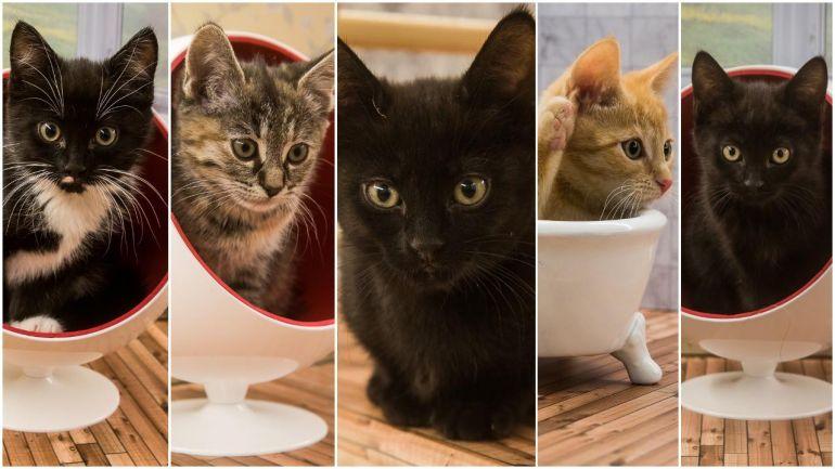 Калейдоскоп, В исландском кошачьем реалити-шоу появились новые действующие лица | В исландском кошачьем реалити-шоу появились новые действующие лица