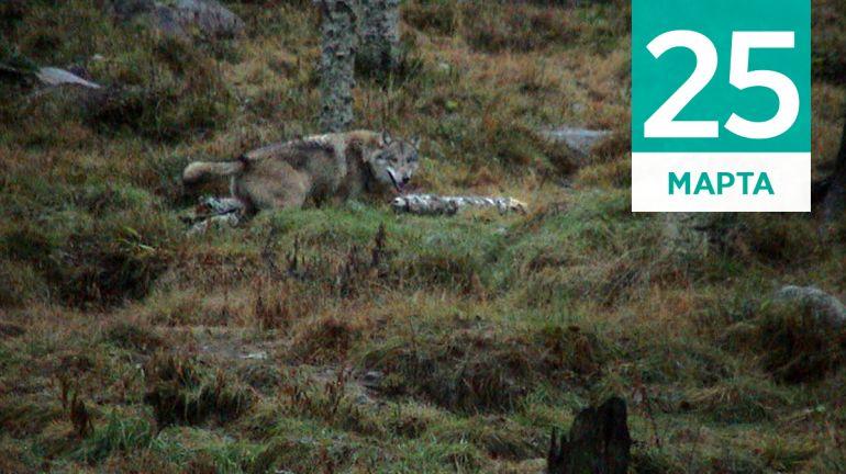 Март, 25 | Календарь знаменательных дат Скандинавии