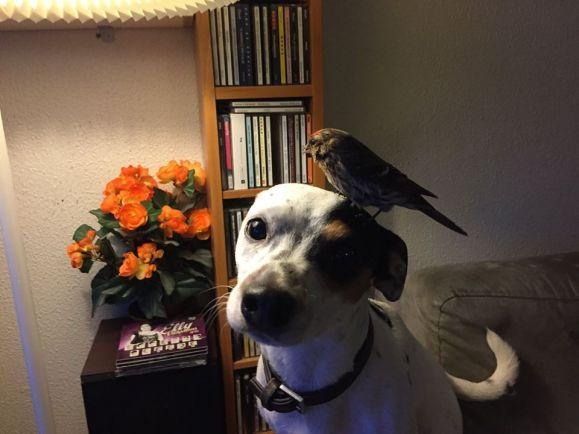 Калейдоскоп, В Исландии собака «уговорила» хозяина спасти замёрзшую птицу | В Исландии собака «уговорила» хозяина спасти замёрзшую птицу