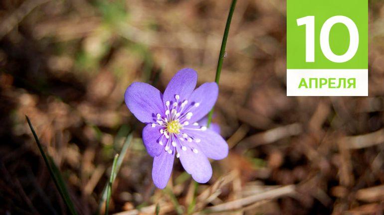 Апрель, 10 | Календарь знаменательных дат Скандинавии
