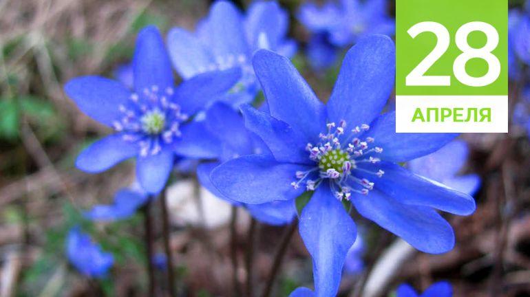 Апрель, 28 | Календарь знаменательных дат Скандинавии