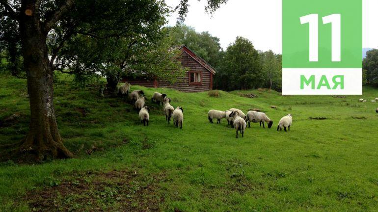 Май, 11 | Календарь знаменательных дат Скандинавии