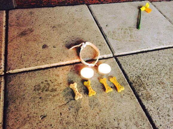 Общество, Пятой жертвой террористического акта в Стокгольме был пёс по кличке Игги | Пятой жертвой террористического акта в Стокгольме был пёс по кличке Игги