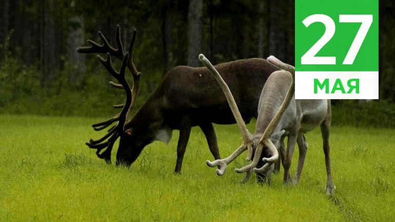 Май, 27 | Календарь знаменательных дат Скандинавии