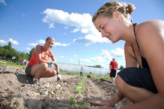 Полезная информация, Датским безработным волонтёрам разрешат больше работать | Датским безработным волонтёрам разрешат больше работать