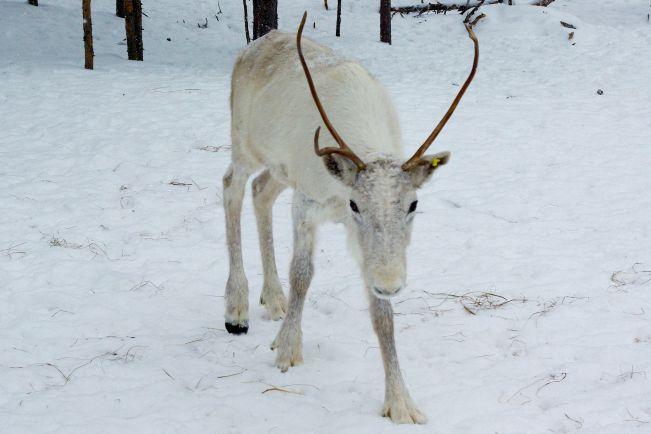 Туризм, Лапландский горнолыжный курорт снова открылся после закрытия сезона | Лапландский горнолыжный курорт снова открылся после закрытия сезона