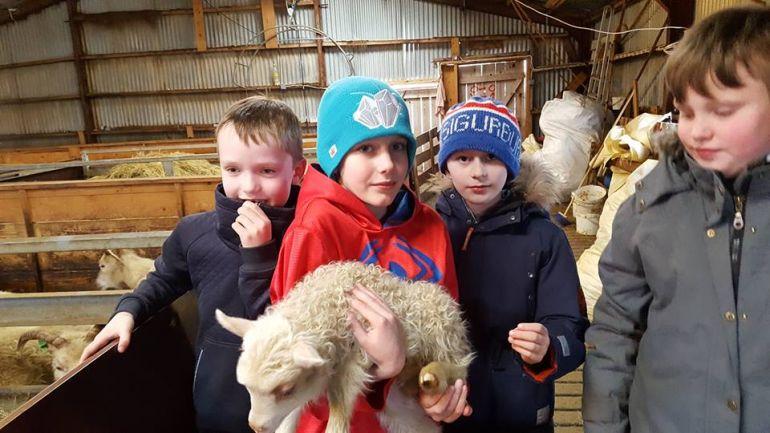 Туризм, Исландские дети предлагают прохожим обнять живого барашка за «доллор» | Исландские дети предлагают прохожим обнять живого барашка за «доллор»
