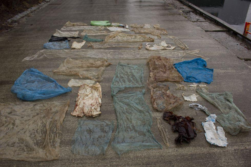 Фото: Хенрик Гленна. В желудке кита нашли 30 пластиковых мешков