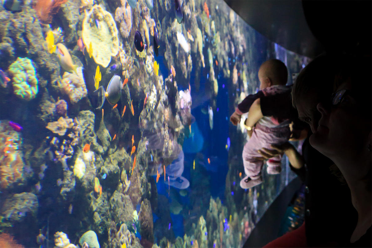Фото: Stig Nygaard / Den Blå Planet  Den Blå Planet, Denmarks National Aquarium
